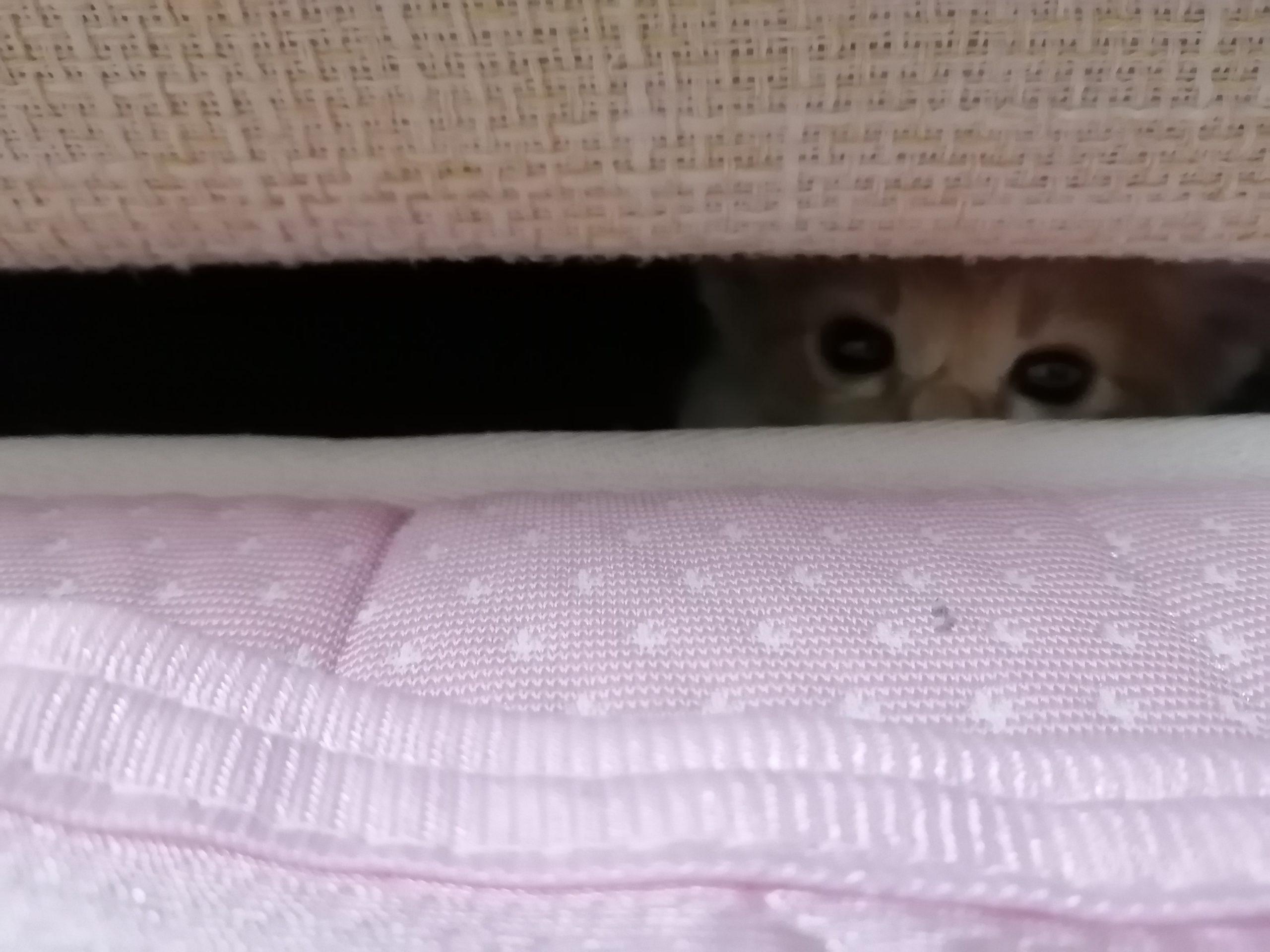 長〜い猫🐈😱